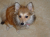 Bailey(1)