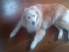Daisy(2)