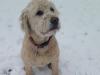 Daisy(3)