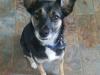 Ollie(1)