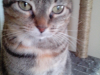 Stella(1)