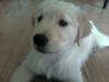 Tucker(1)