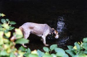 Milo enjoying a drink in Mill Creek on a Park Adventure