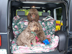 Rudy and Taylor being chauffeured to the park